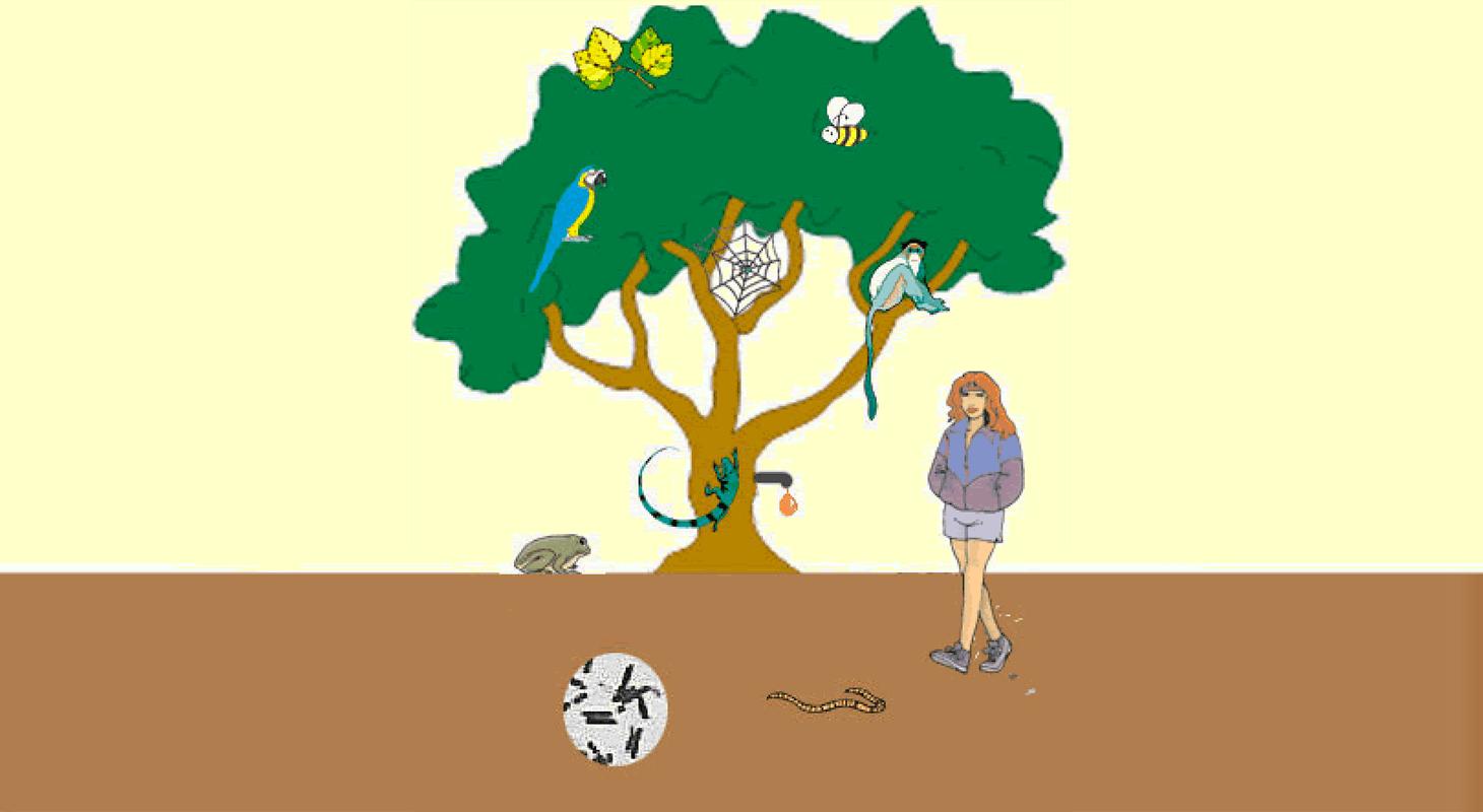 tree of life stem resource finder