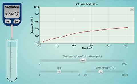 Lactase enzyme action simulation screen shot